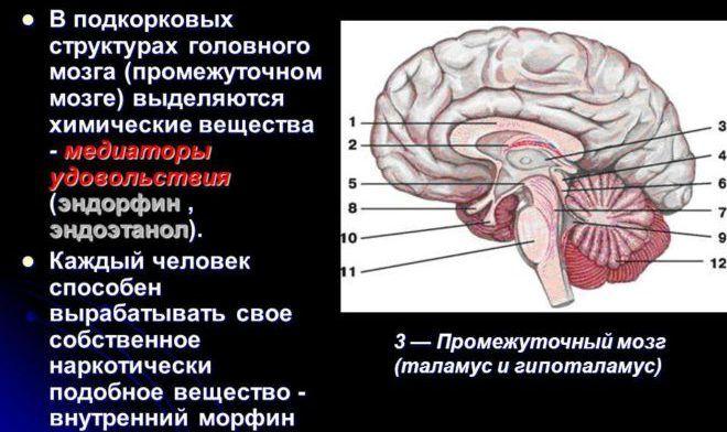 Эндорфин и мозг