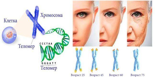 Физиологическое старение женщины