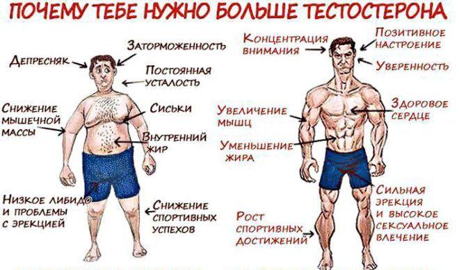 Как повысить тестостерон в организме мужчины в домашних условиях