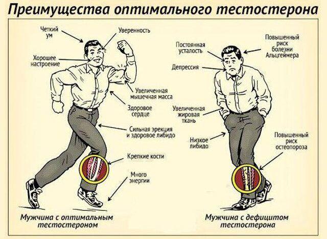 Как увеличить тестостерон