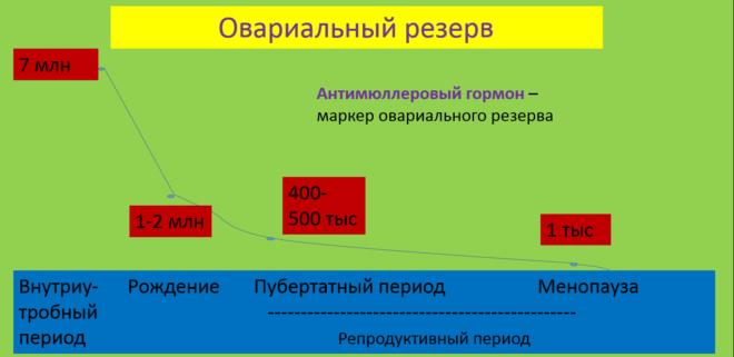Овариальный резерв по АМГ