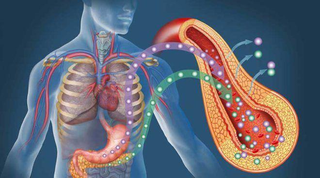 Роль инсулина в организме человека