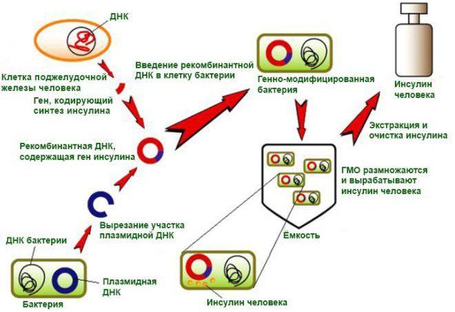 Схема получения инсулина методами генной инженерии