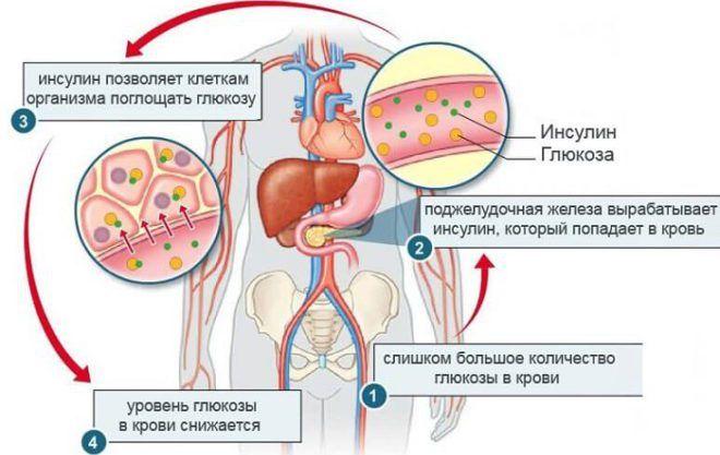 Схема выработки инсулина в организме