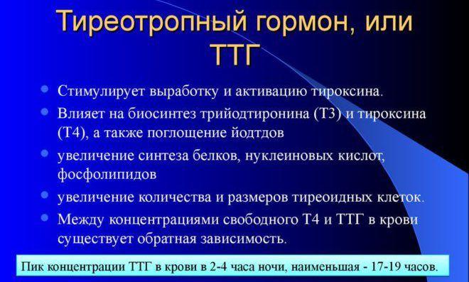 Тиреотропный гормон, или ТТГ