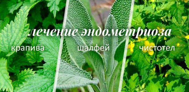 Лечение эндометриоза чистотелом