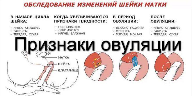 Беременность в день овуляции возможна