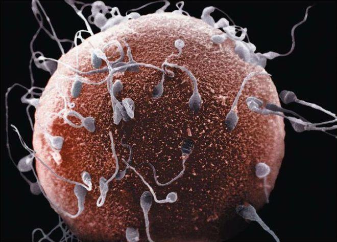 est-li-gormoni-v-sperme