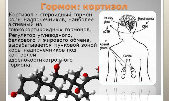 Основная задача кортизола