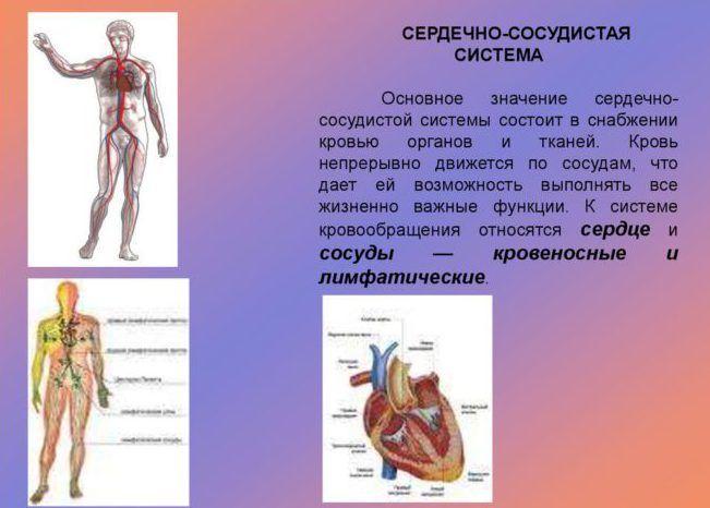 Патологии сердечной системы