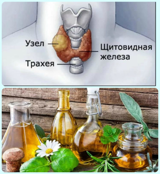 Применение отваров при щитовидки