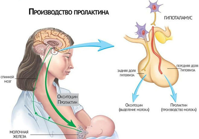 Чи можна здавати аналіз на гормони під час місячних? » журнал здоров'я iHealth 5