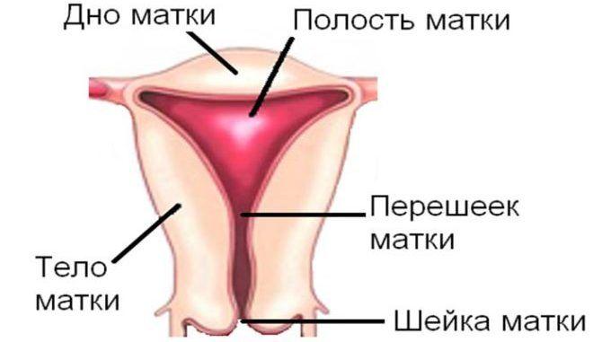 Может при цервикозе кровить при физических нагрузках или сексе