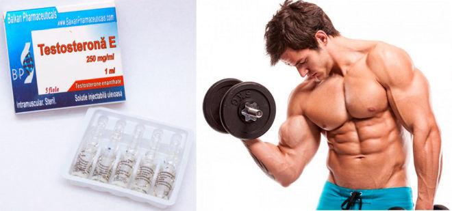 Тестостерон энантат действие