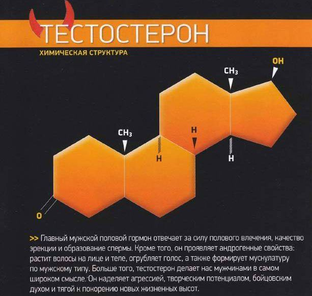Тестостерон строение