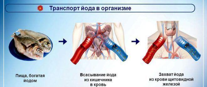 Улучшение всасывания йода кишечником