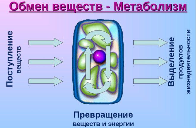 Замедленный метаболизм