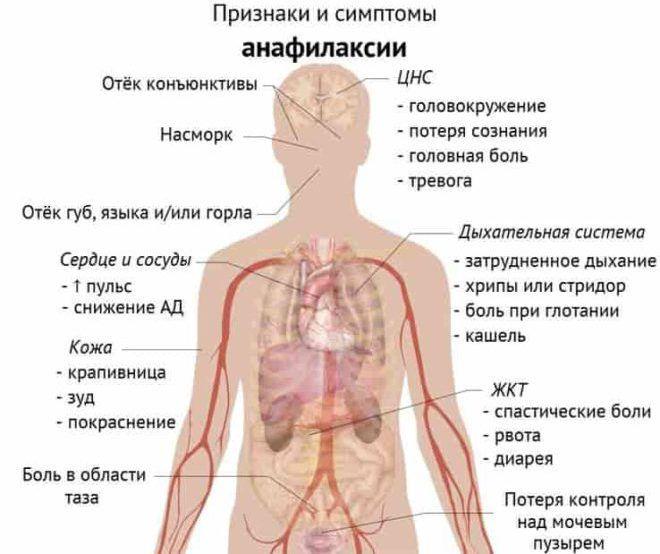 Епінефрин: інструкція по застосуванню, форма випуску » журнал здоров'я iHealth 1