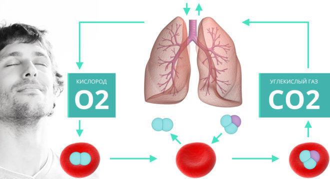 Физиология дыхания