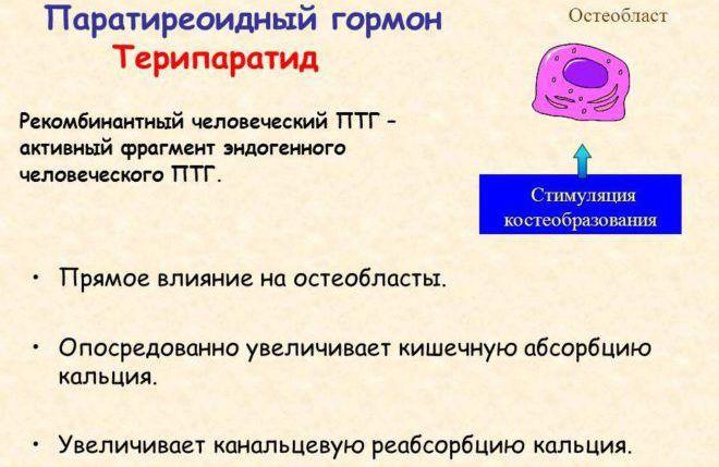 Функции гормона
