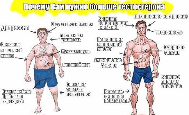 тестостерон при физических нагрузках