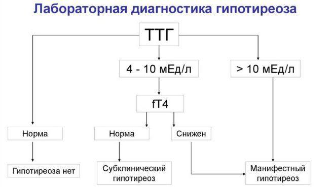 Лабораторная диагностика гипотиреоза