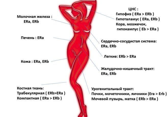 отсутствие секса недостаток прогестерона-щя2