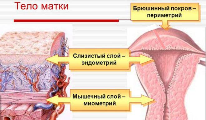В чем разница эндометрита и эндометриоза