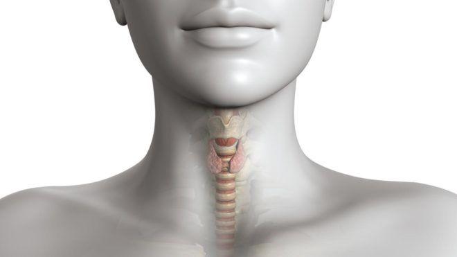 Норма объема щитовидной железы