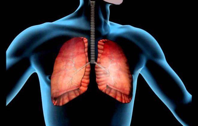 Органы дыхательной системы