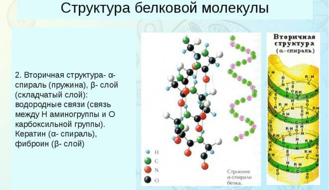 Структура белковой молекулы
