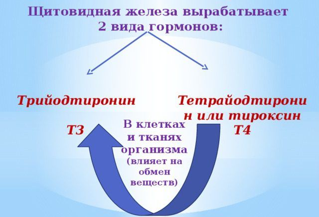 Тетрайодтиронин