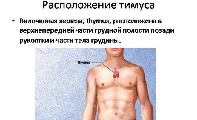 Тимус
