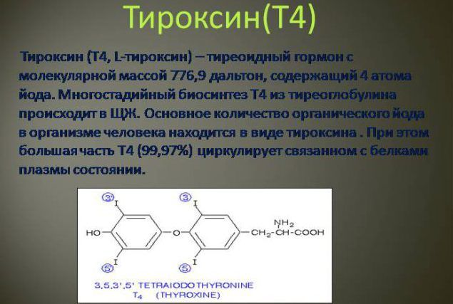 Тироксин гормон