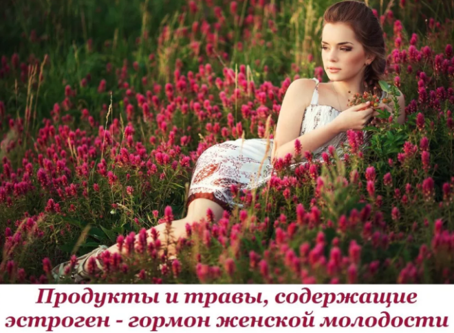 Травы с эстрогеном
