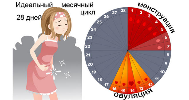 Урегулировать менструальный цикл