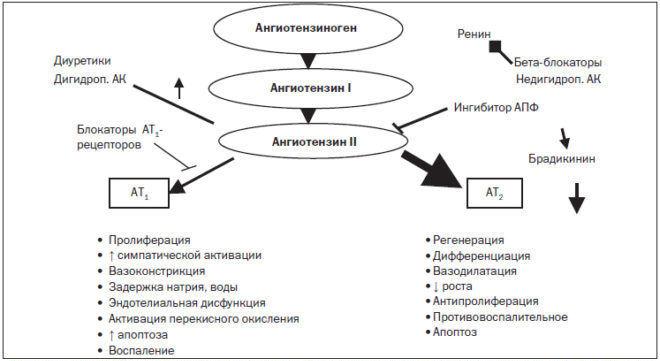 орма ангиотензина 2