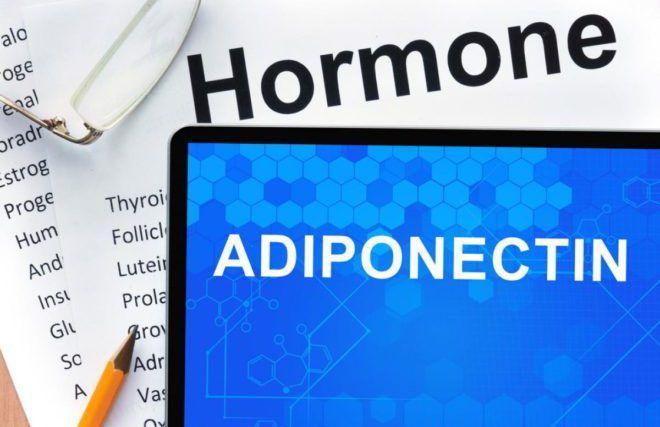 Адипонектин гормон