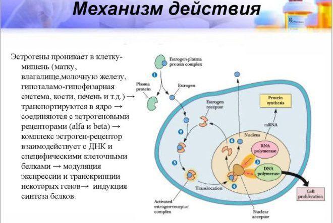 Эстроген-рецептор