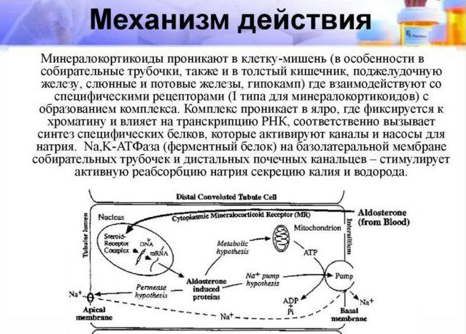 Минералокортикоиды