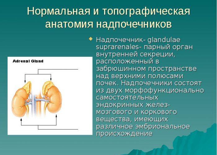 Тромбоз сосудов ткани надпочечников